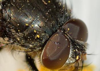 dicas de como acabar com os insetos em casa