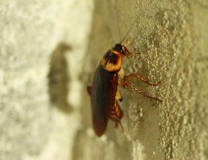 Como acabar com insetos perigosos