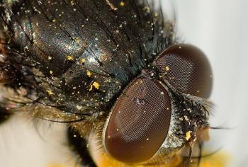 14 dicas importantes para evitar a infestação de insetos em sua casa