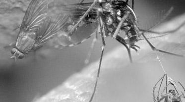 Termonebulização para dedetizar insetos