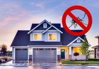 como dar um fim em insetos perigosos