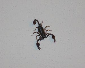dicas-para-acabar-com-insetos-perigosos-em-casapng