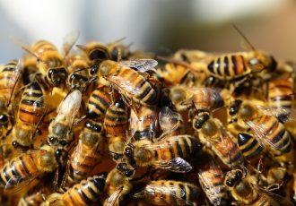abelhas, marimbondos e vespas dedetização