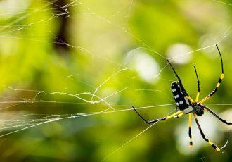 dicas para acabar com aranhas em casa