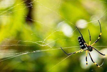4 dicas importantes de como acabar com aranhas