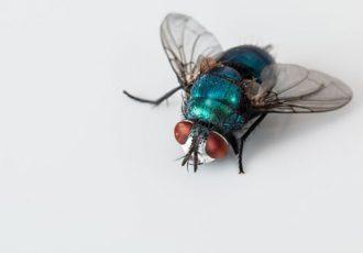 insetos no inverno