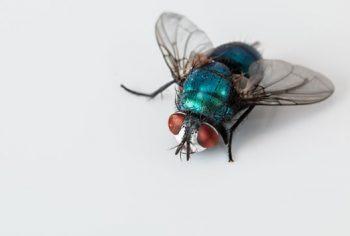 Porque no inverno os insetos somem da nossa casa?