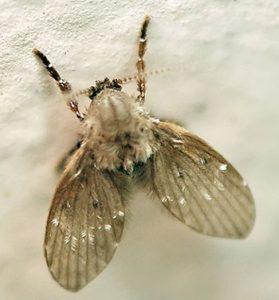 mosquitinhos de banheiro