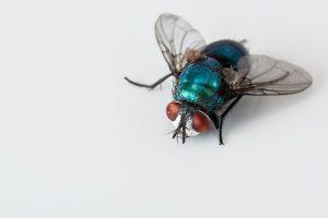 insetos que causam doenças
