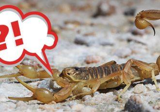 escorpião é um aracnídeo?