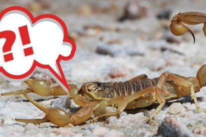 Escorpião é aracnídeo?