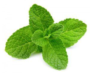 plantas-que-são-repelentes (1)