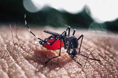Dengue, Zika e Chikungunya – O Que fazer para evitar!