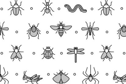 Quais são os insetos mais comuns no verão?
