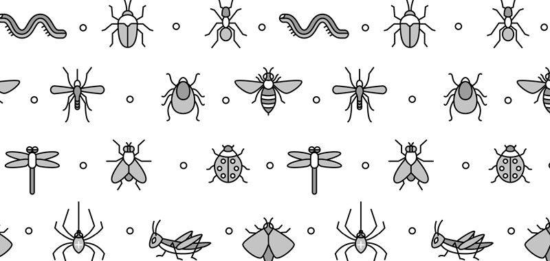 Quais os insetos comuns no verão