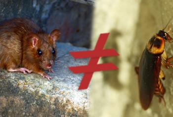 Qual a diferença entre fezes de rato e fezes de barata?