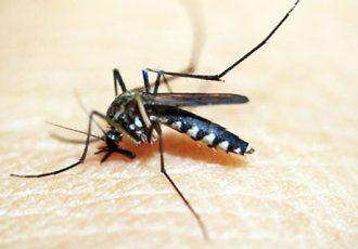 15 curiosidades sobre o mosquito da dengue