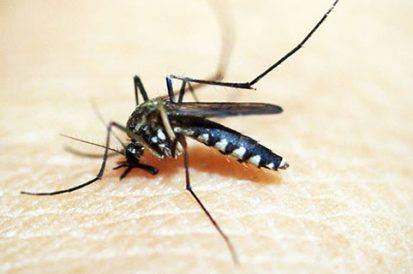 15 curiosidades sobre o mosquito Aedes Aegypti