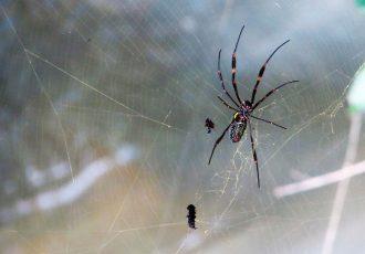 dedetizadora de aranhas