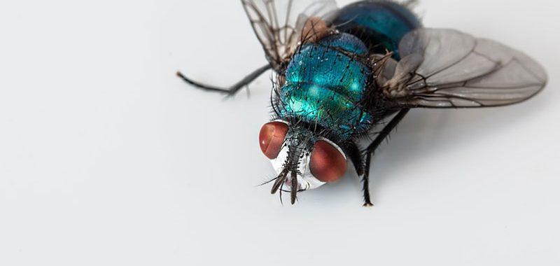 Dedetizadora de moscas