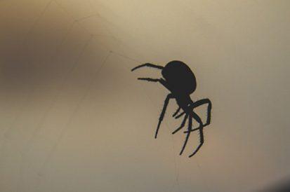 Aranhas mais venenosas no Brasil e no mundo