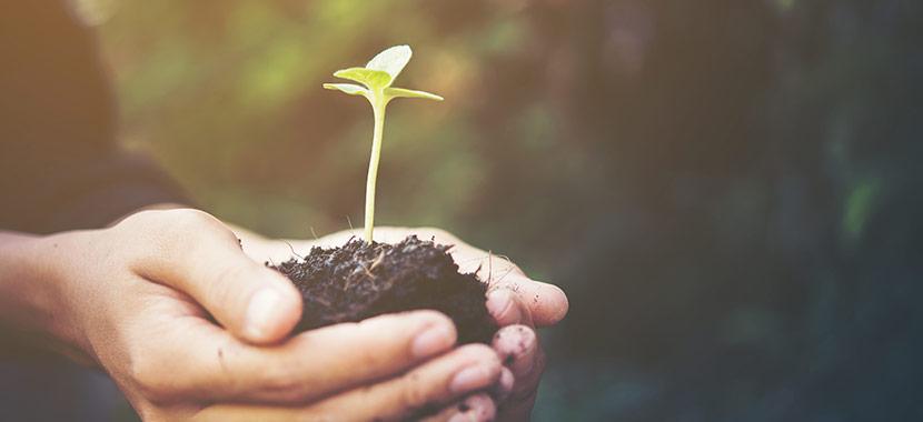 bons hábitos para ajudar o meio ambiente