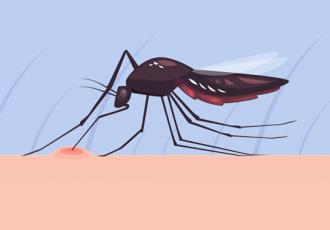 Doenças e insetos