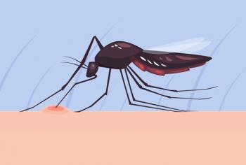 As doenças mais transmitidas por insetos