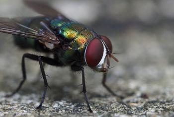 Como acabar com as moscas dentro de casa?