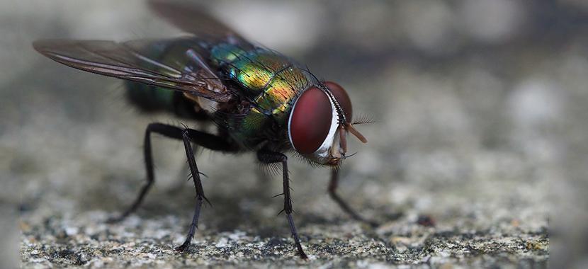 acabar com as moscas