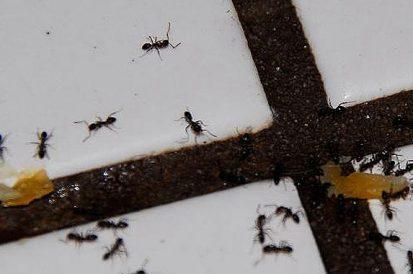 6 Formas de manter os insetos longe nesse verão