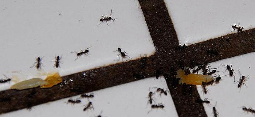 dicas para manter os insetos afastados no verão