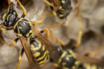 As picadas de inseto mais dolorosas do mundo