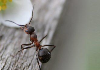 Infestação de formigas