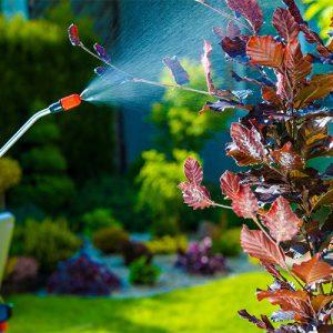 Dedetização para insetos, ratos, cupins, baratas, formigas, mosquitos e outros