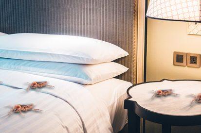 Como evitar baratas no quarto?