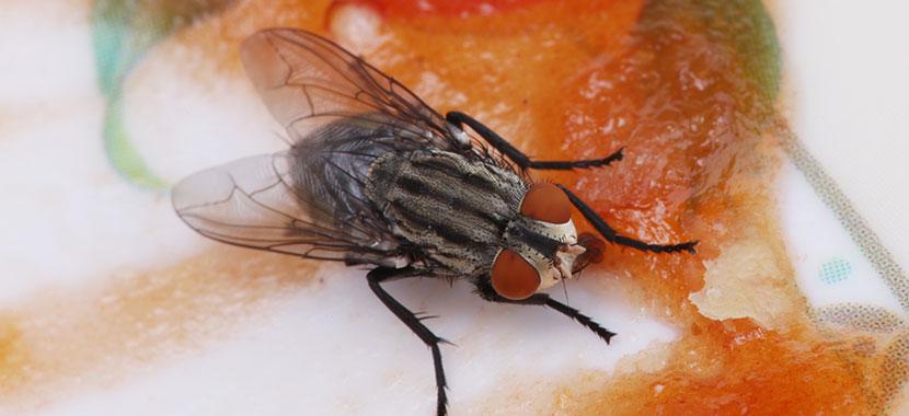 Formas de acabar com as moscas