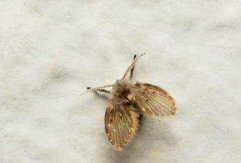 Por que aparecem mosquitos no banheiro?