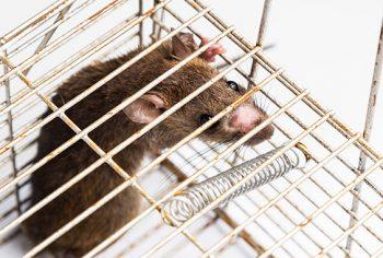 Especial Síndico – Como fazer para evitar cupins, baratas e roedores no condomínio