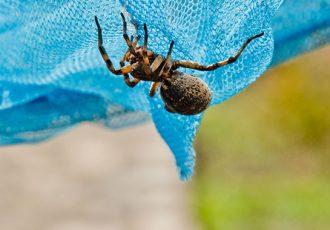 acidente aranha ou escorpião o que fazer?