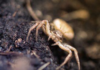 o que fazer ao encontrar aranhas dentro de casa?