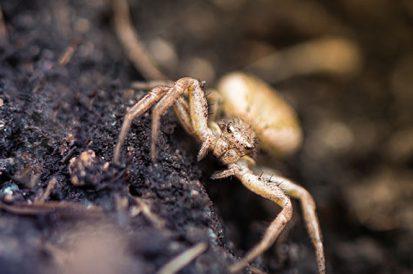 Encontrei aranhas no jardim ou dentro de casa, o que fazer?