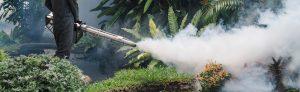 Contratar termonebulização para acabar com insetos rasteiros e voadores