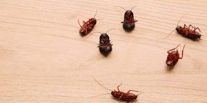 Os 4 as que colaboram para a infestações de pragas urbanas