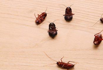 Você conhece os 4 As que colaboram para uma infestação?