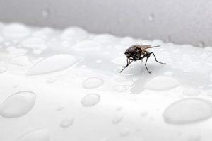 acabar com moscas em casa